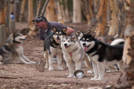 Malamutes at activities day